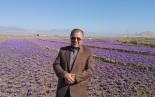 در سال تولید و اشتغال زعفران  ( طلای سرخ ملت ایران  ) مورد بی مهری و عدم تدبیر است